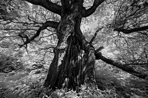 Tree of Sorrow... by xMEGALOPOLISx