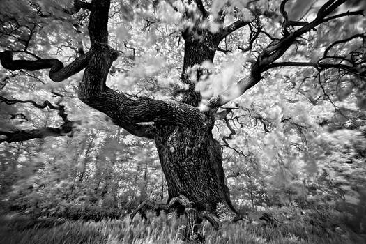 Portrait of tree. . . .