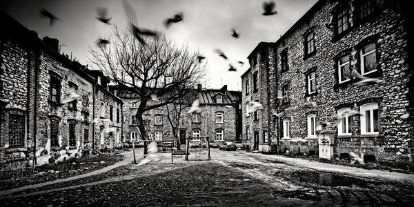 Birds... by xMEGALOPOLISx