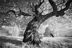 Portrait of Tree