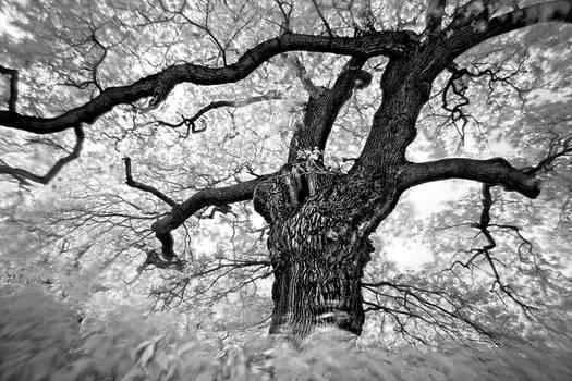 Last Tree...