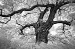 Last Tree... by xMEGALOPOLISx