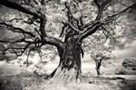 Portrait of Tree...