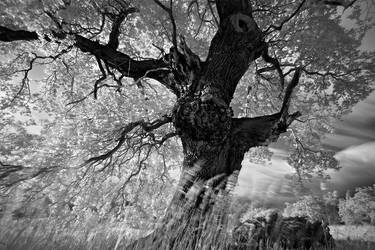Portrait of Tree. . . by xMEGALOPOLISx