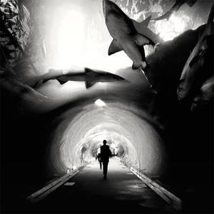Dubai - Sharks love You by xMEGALOPOLISx