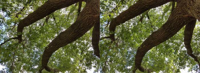Tree Tentacles 2