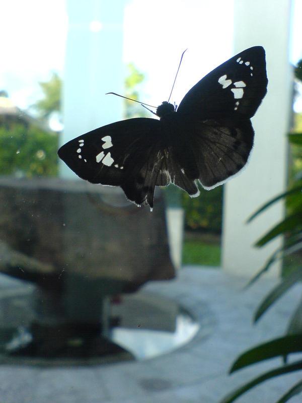 moth of death by erisdoll