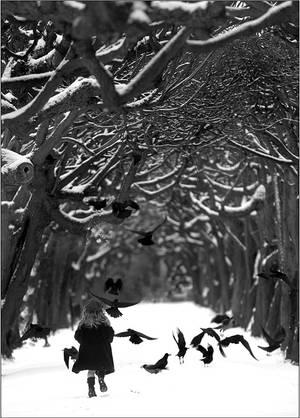 The birds by fotouczniak