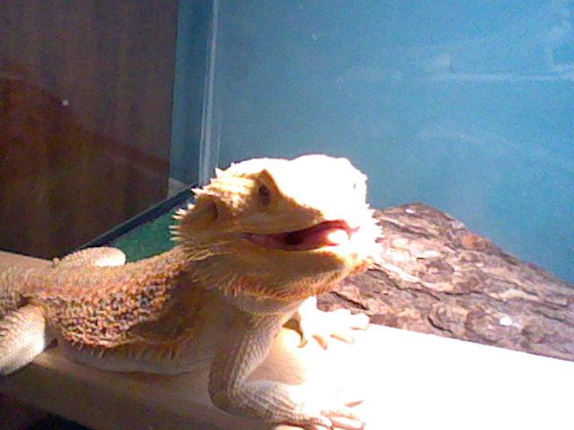 Basil's smile by kingdragon01