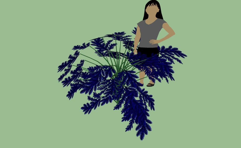 Fern Ursa minan tree fern two by kingdragon01
