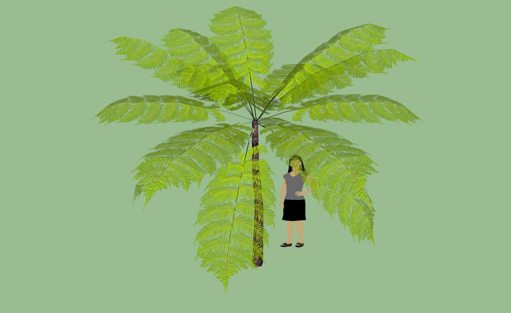 Ursa minan tree fern three by kingdragon01
