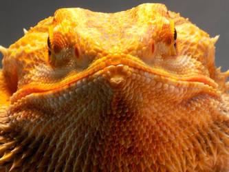 Big orange face! by kingdragon01