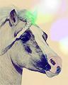 Horse avatar by miltamo