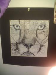 Cougar mix shade