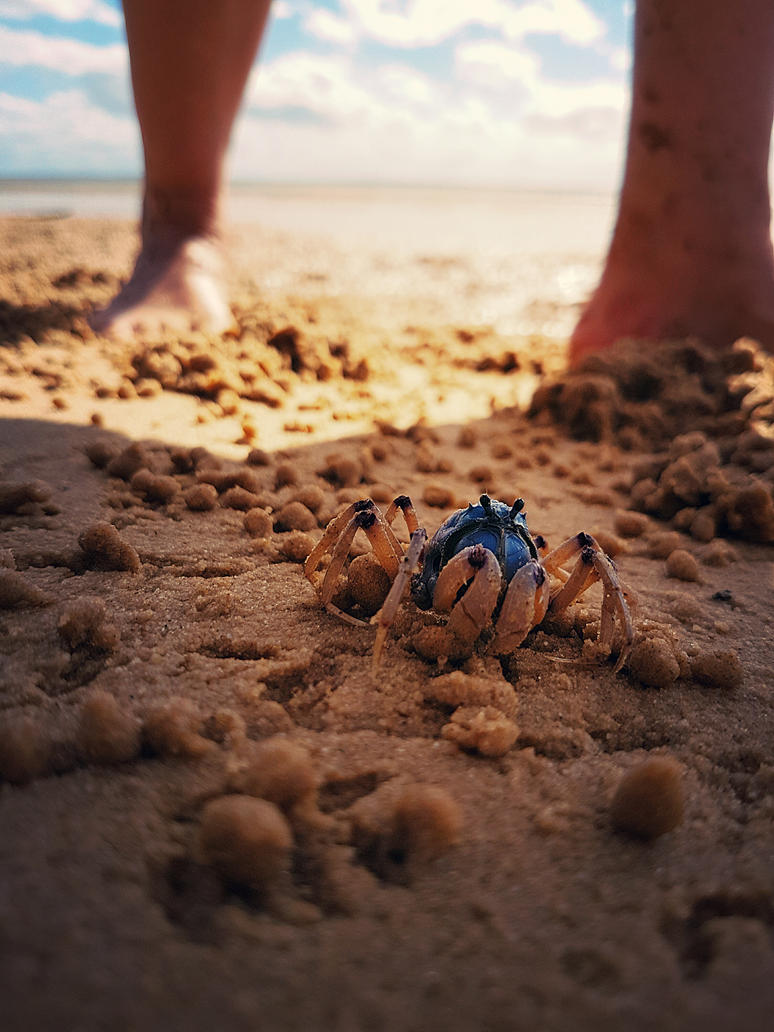 Love the soilder crabs! by janina