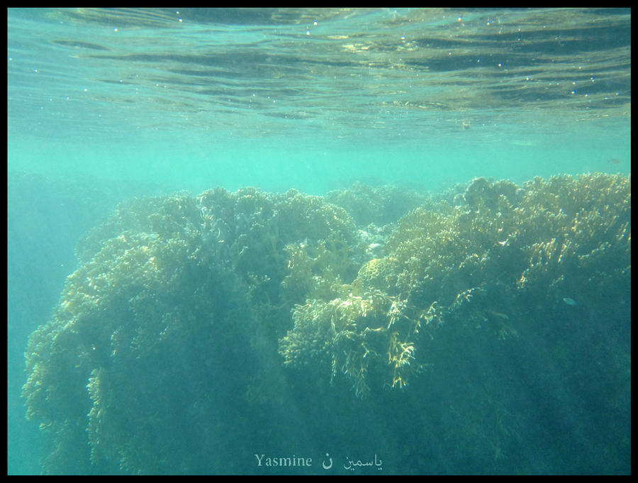 Coral III by xxfrozenflamesxx