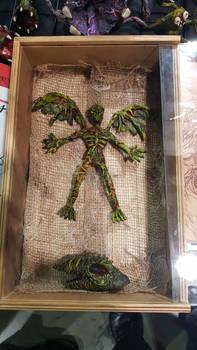 Fairy Mummy specimen
