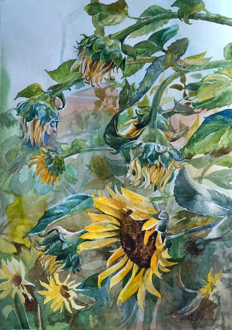 Flowers sunflowers by DariaGALLERY