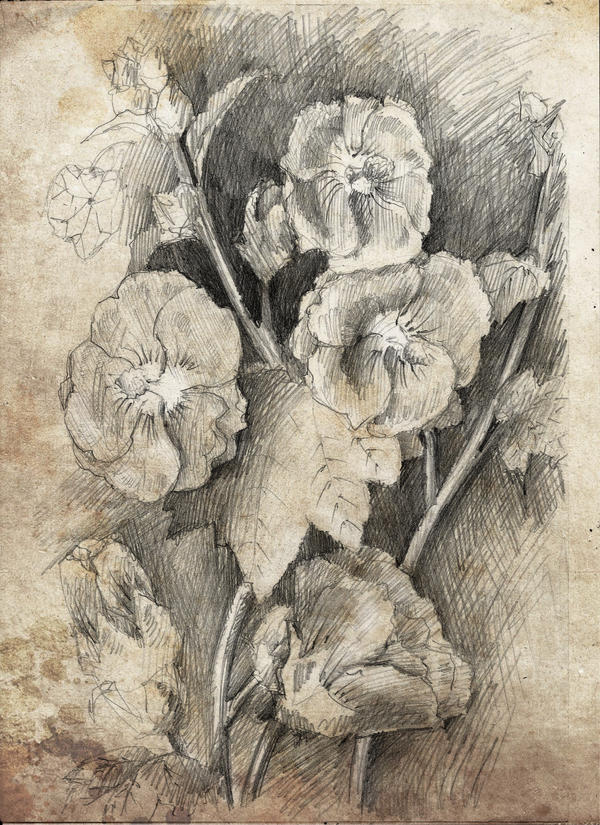 Study of flowers by DariaGALLERY