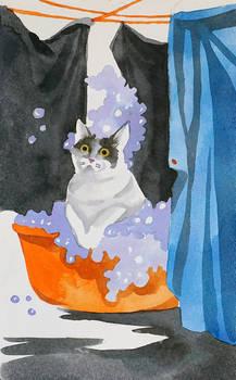 Catvember: Big Washing