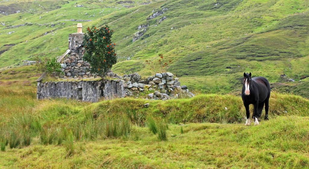 Ruins in the Pasture by vseger