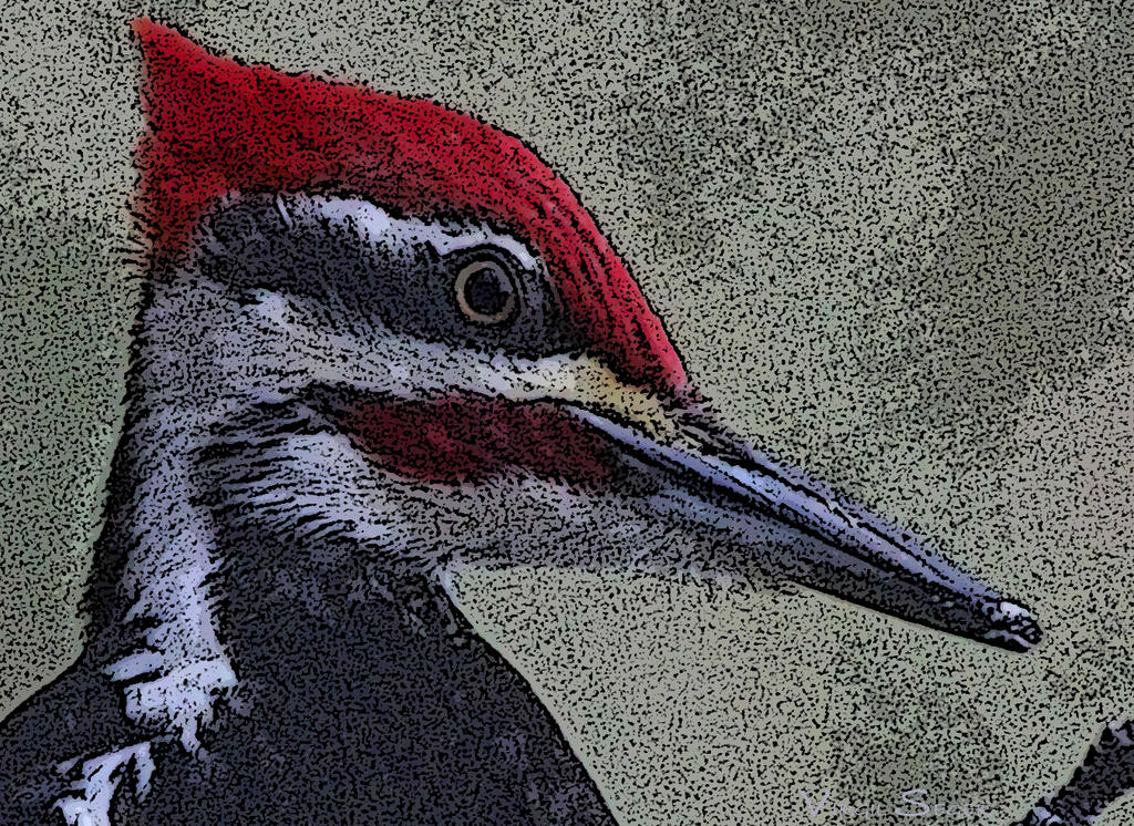Pileated Woodpecker by vseger