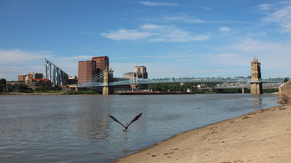 The Roebling Bridge and the Heron by vseger