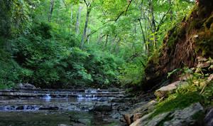 Cedar Falls Trail I