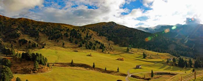 Cattle in the Alpi di Siusi