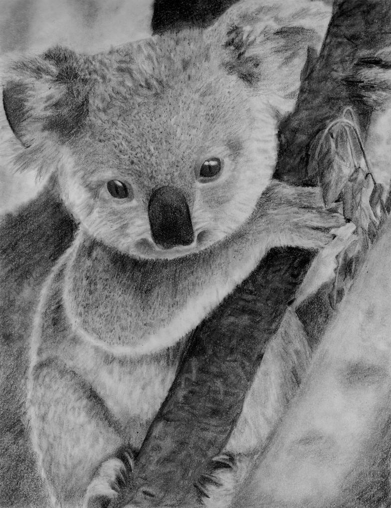 the description of the australian jewel the koala Koala in australia koala and its baby (joey) in a eucalyptus tree in australia benjamint444 formerly killed in huge numbers for their fur, especially during the 1920s and '30s, koalas dwindled in number from several million to a few hundred thousand.
