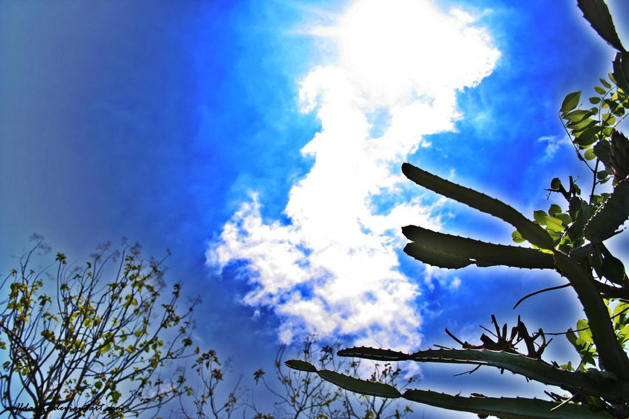 Light Sky by raffdaime