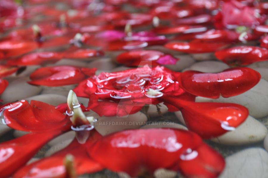 Roses by raffdaime