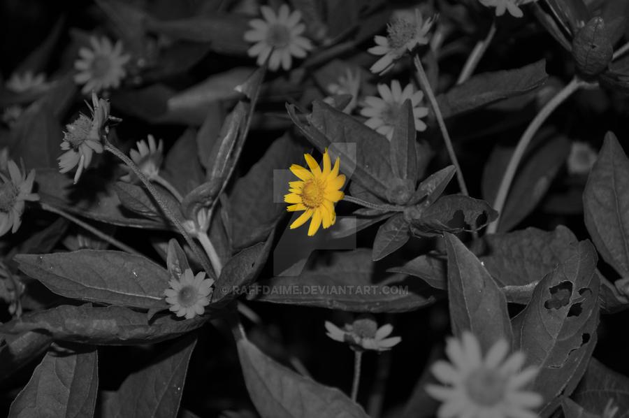 Flower by raffdaime