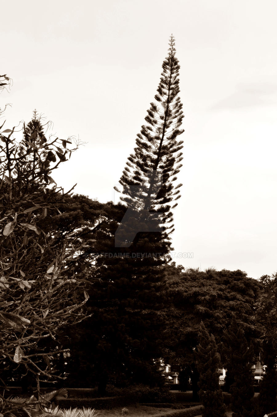The Tree by raffdaime