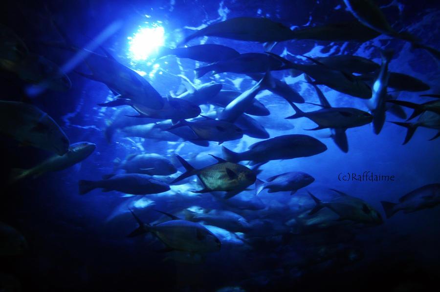 Undersea by raffdaime