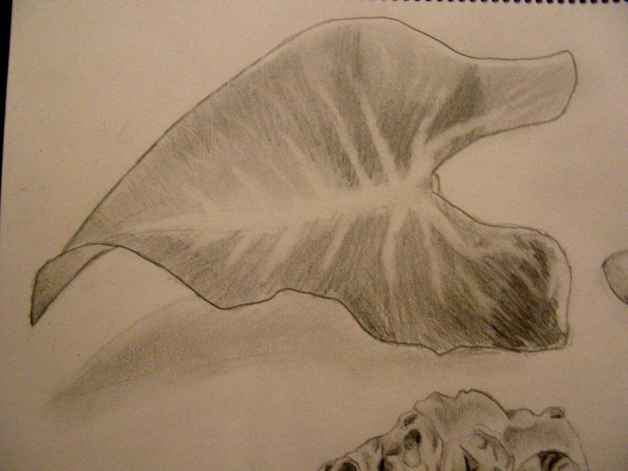 Big Leaf still life by Ultimaodin