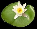 Asia Japanese Scene Garden Flower (6)