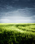 Backgrounds grass field