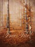 Autumn Wood free background