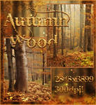 Autumn Wood free backgrounds