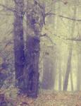 Misty Wood 2