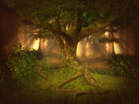 Forest Light free background