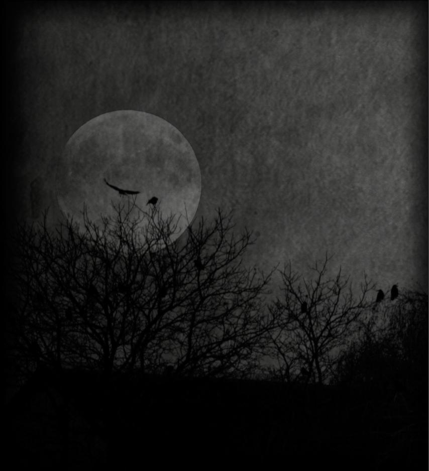 Mondaufgang im Winter by ArkanumTenebrae