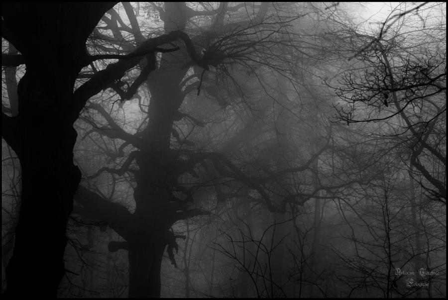 Geisterwald by ArkanumTenebrae