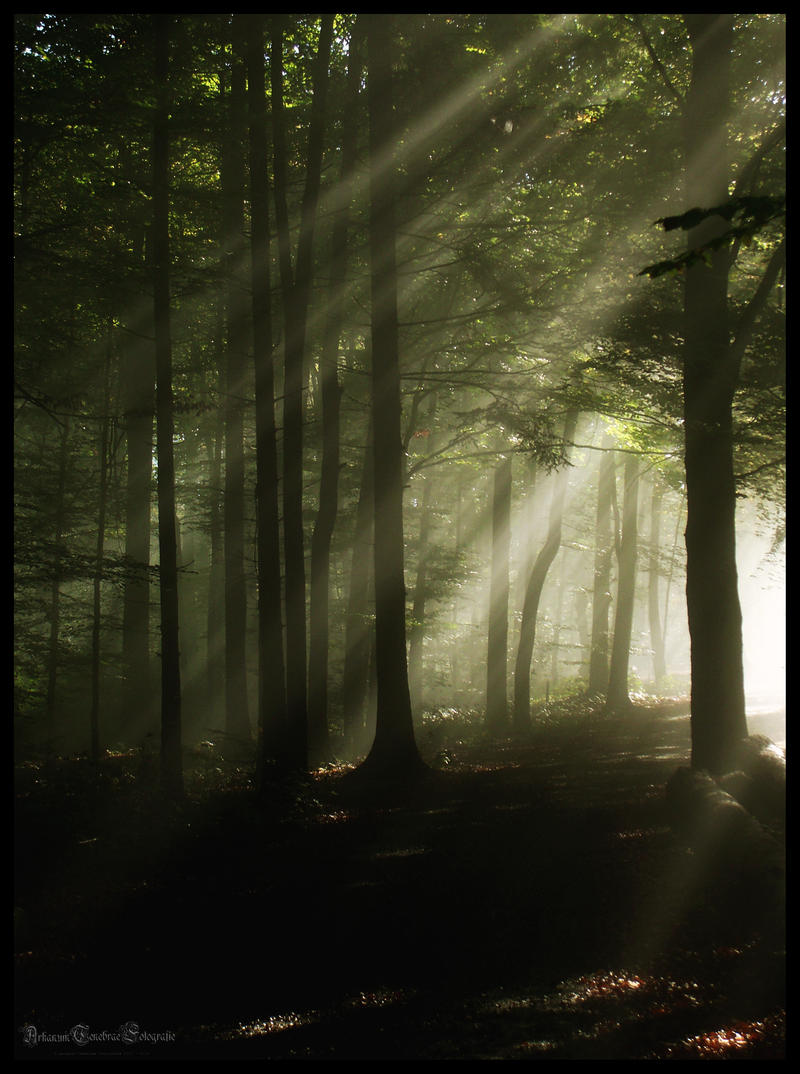 Through the autumn mist of a forgotten forest by ArkanumTenebrae