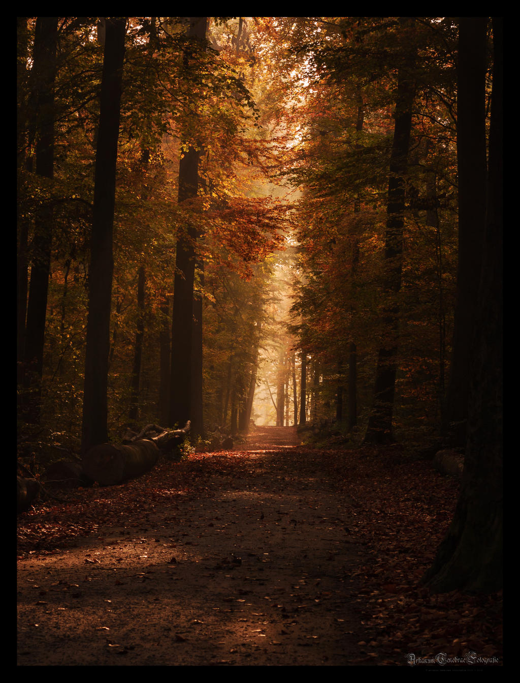 an autumn morning in the forest by ArkanumTenebrae