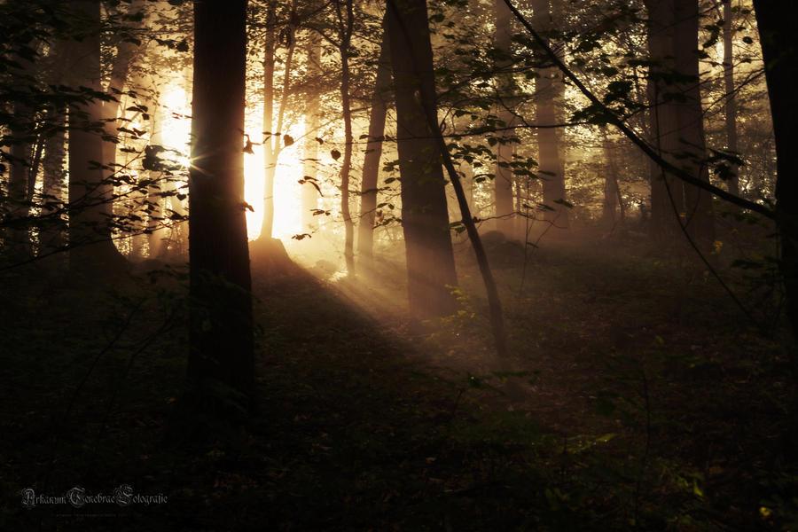 the morning sun breaks through by ArkanumTenebrae