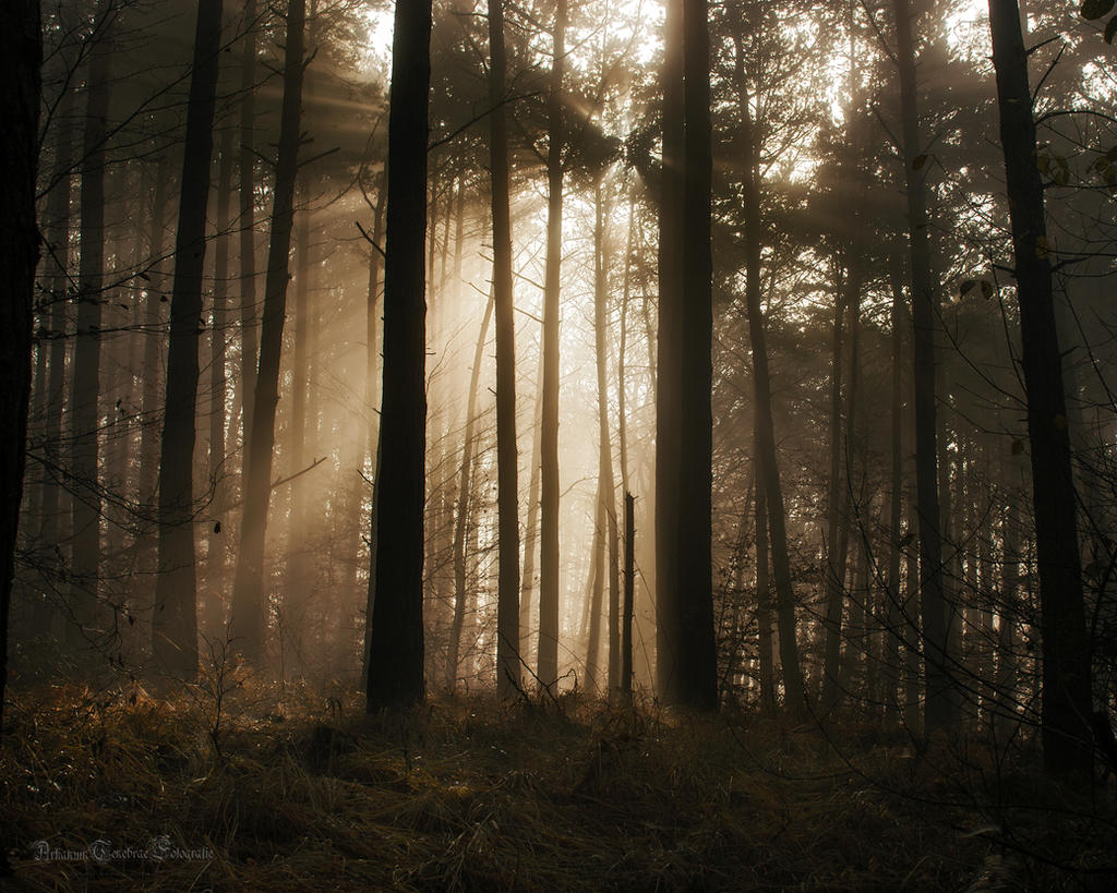 the morning sun in the forest by ArkanumTenebrae