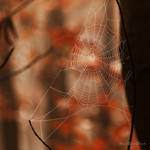 the web in the forest
