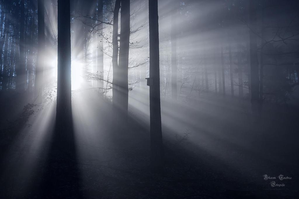 der Morgen by ArkanumTenebrae